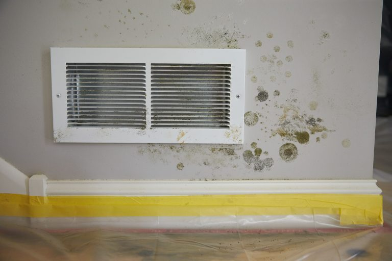 JCP_ServiceMaster_Restore_Mold_Damaged_0267
